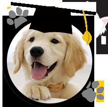 puppy-grad