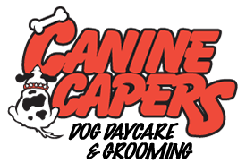 canine capers dog daycare and grooming